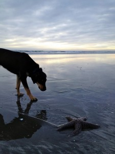 dog and starfish